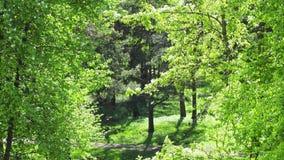 Χνούδι λευκών στο πάρκο φιλμ μικρού μήκους