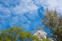 Χνούδι λευκών σε ένα υπόβαθρο του μπλε ουρανού Στοκ φωτογραφία με δικαίωμα ελεύθερης χρήσης