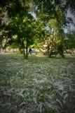 Χνούδι θερινών λευκών Στοκ Εικόνα