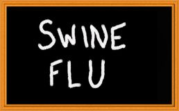 χοίροι γρίπης Στοκ Εικόνες