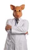 χοίροι γρίπης metaphore Στοκ φωτογραφία με δικαίωμα ελεύθερης χρήσης