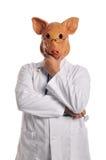 χοίροι μεταφοράς γρίπης Στοκ Φωτογραφίες