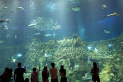Χογκ Κογκ: Ωκεάνιο πάρκο Στοκ Εικόνα