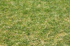 Χονδροειδής πράσινη χλόη στοκ φωτογραφία με δικαίωμα ελεύθερης χρήσης
