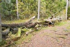 Χονδροειδή ξύλινα συντρίμμια στοκ εικόνα με δικαίωμα ελεύθερης χρήσης