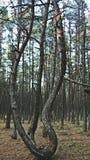 Χορεύοντας δάσος Στοκ φωτογραφίες με δικαίωμα ελεύθερης χρήσης