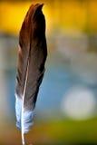 Χορεύοντας φτερό Στοκ Φωτογραφίες