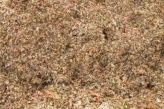 Χορτάρι αραβόσιτου καλαμποκιού που αλέθεται ως ζωοτροφές Απόβλητα από το καλαμπόκι που ξεφλουδίζει τη διαδικασία στοκ εικόνες με δικαίωμα ελεύθερης χρήσης