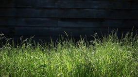Χορτάρι και παλαιό σπίτι απόθεμα βίντεο