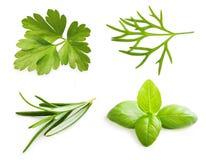Χορτάρι μαϊντανού, φύλλα βασιλικού, άνηθος, καρύκευμα δεντρολιβάνου Στοκ Εικόνα