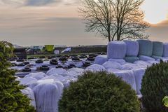 Χορτάρι που προετοιμάζεται για τη σίτιση της αγελάδας Στοκ φωτογραφία με δικαίωμα ελεύθερης χρήσης