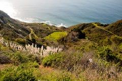 Χορταριασμένη pampas χλόη στη μεγάλη ακτή Sur, Los Padres εθνικά FO Στοκ Εικόνες