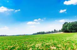 Χορτοτάπητας γηπέδων του γκολφ Στοκ φωτογραφίες με δικαίωμα ελεύθερης χρήσης