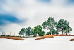Χορτοτάπητας γηπέδων του γκολφ Στοκ εικόνες με δικαίωμα ελεύθερης χρήσης
