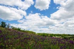 χορτοτάπητας λουλουδιών άνευ ραφής Στοκ Φωτογραφίες
