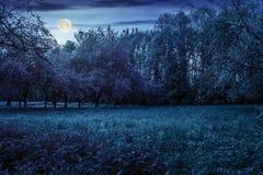 Χορτοτάπητας στον κήπο με τα οπωρωφόρα δέντρα τη νύχτα Στοκ Εικόνες