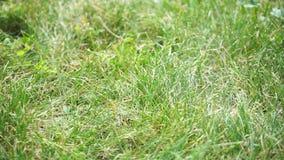 Χορτοτάπητας στο στατικό μήκος σε πόδηα πάρκων απόθεμα βίντεο