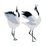 Χορός ζευγαρώματος των γερανών Στοκ Εικόνες