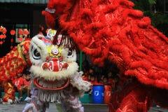 Χορός λιονταριών πραγμάτων στον κινεζικό νέο εορτασμό έτους Στοκ Εικόνες