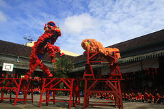 Χορός λιονταριών πραγμάτων στον κινεζικό νέο εορτασμό έτους Στοκ φωτογραφία με δικαίωμα ελεύθερης χρήσης