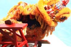 Χορός λιονταριών πραγμάτων στον κινεζικό νέο εορτασμό έτους Στοκ Φωτογραφία