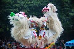 Χορός λιονταριών Στοκ Εικόνα