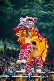 Χορός λιονταριών Στοκ Εικόνες