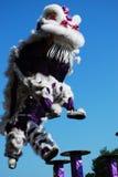Χορός λιονταριών Στοκ φωτογραφίες με δικαίωμα ελεύθερης χρήσης