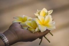 χούφτα λουλουδιών Στοκ Φωτογραφίες