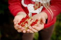 Χούφτα των κόκκινων και άσπρων σταφίδων στα χέρια παιδιών ` s Στοκ φωτογραφίες με δικαίωμα ελεύθερης χρήσης