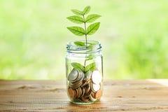 Χρήματα στη φύση Στοκ Εικόνες