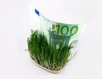 χρήματα χλόης Στοκ φωτογραφία με δικαίωμα ελεύθερης χρήσης