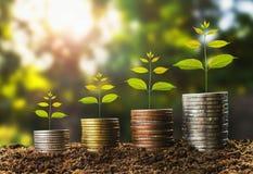χρήματα growht στην έννοια χώματος και δέντρων, χρηματοδότηση επιχειρησιακής επιτυχίας στοκ εικόνες