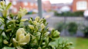 χρήση φυτών φύλλων σπιτιών λεπτομέρειας ανασκόπησης στοκ φωτογραφίες με δικαίωμα ελεύθερης χρήσης