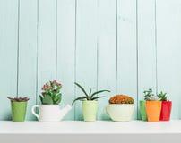 χρήση φυτών φύλλων σπιτιών λεπτομέρειας ανασκόπησης Στοκ Εικόνες