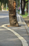 Χρηματοκιβώτιο τα δέντρα Στοκ Φωτογραφίες