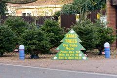 Χριστουγεννιάτικα δέντρα για το σημάδι πώλησης Στοκ εικόνα με δικαίωμα ελεύθερης χρήσης