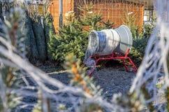 Χριστουγεννιάτικα δέντρα στην πώληση Στοκ Εικόνες