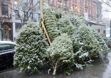 Χριστουγεννιάτικα δέντρα για την πώληση Στοκ φωτογραφία με δικαίωμα ελεύθερης χρήσης