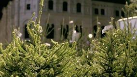 Χριστουγεννιάτικα δέντρα για την πώληση απόθεμα βίντεο