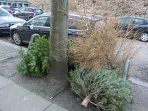 Χριστουγεννιάτικα δέντρα μετά από τα Χριστούγεννα, unadorned και στεγνωμένος στην άκρη του δρόμου στοκ εικόνες με δικαίωμα ελεύθερης χρήσης