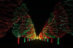 Χριστουγεννιάτικα δέντρα που ανοίγουν το δρόμο στοκ εικόνες