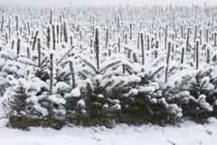 χριστουγεννιάτικα δέντρ&alph Στοκ Εικόνες