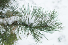 Χριστουγεννιάτικο δέντρο κάτω από το πρώτο χιόνι Στοκ εικόνες με δικαίωμα ελεύθερης χρήσης