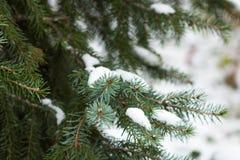 Χριστουγεννιάτικο δέντρο κάτω από το πρώτο χιόνι Στοκ Φωτογραφίες