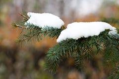 Χριστουγεννιάτικο δέντρο κάτω από το πρώτο χιόνι Στοκ Εικόνες