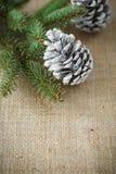 Χριστουγεννιάτικο δέντρο με τους κώνους Στοκ φωτογραφία με δικαίωμα ελεύθερης χρήσης