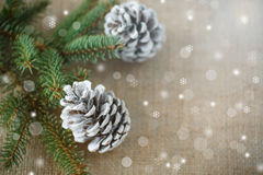 Χριστουγεννιάτικο δέντρο με τους κώνους Στοκ Φωτογραφία