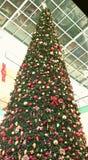 Χριστουγεννιάτικο δέντρο με το φωτισμό Στοκ Φωτογραφίες