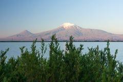 Χριστουγεννιάτικο δέντρο μπροστά από το βουνό Ararat Στοκ Εικόνες